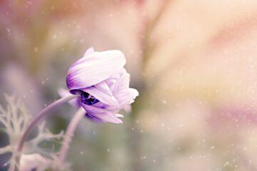 Angst vor Blumen