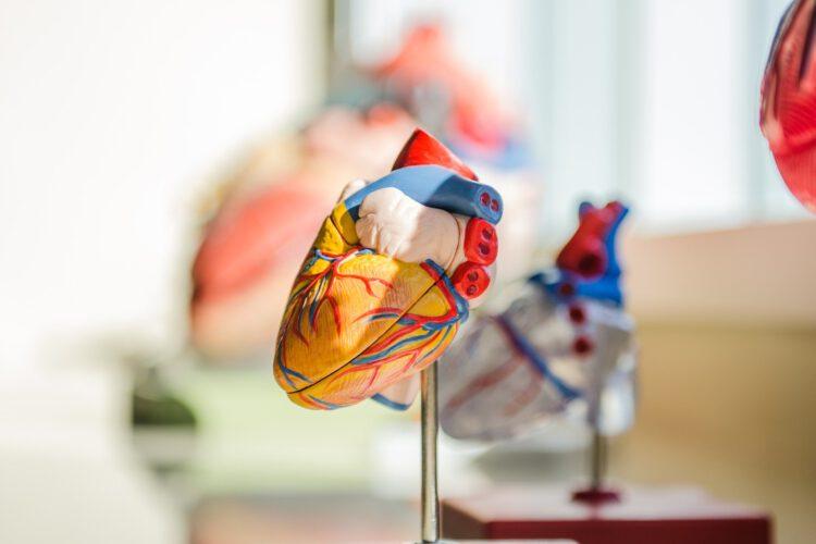 Nierenschwäche Herzschwäche